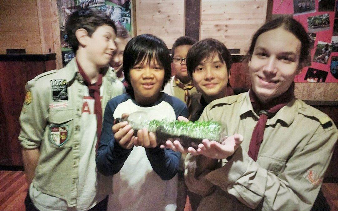 Plastikpflanzen-Pflanzen