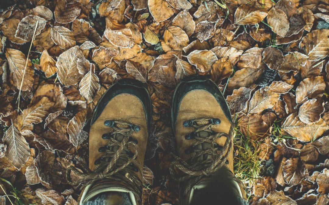 Herbstlager 17′ – Pfadis